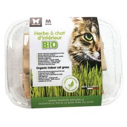 Herbe à chat bio à semer en...