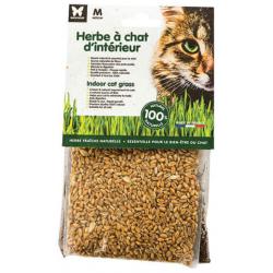 Herbe à chat à semer